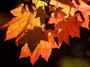 7002483-autumn-leaves-background